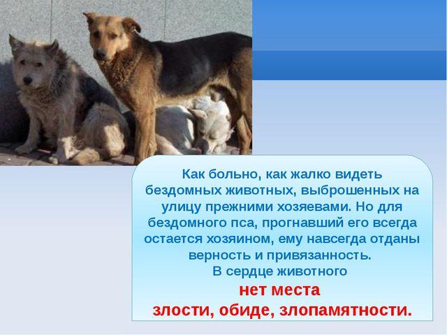 Как больно, как жалко видеть бездомных животных, выброшенных на улицу прежним...