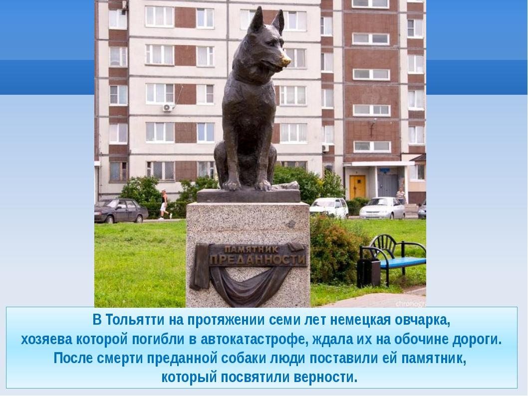 В Тольятти на протяжении семи лет немецкая овчарка, хозяева которой погибли...