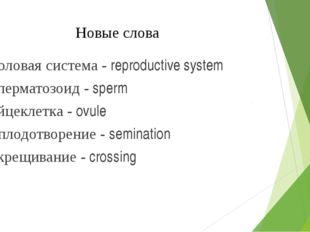Новые слова Половая система - reproductive system Сперматозоид - sperm Яйцекл