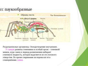 Класс паукообразные Раздельнополые организмы. Оплодотворение внутреннее. У са