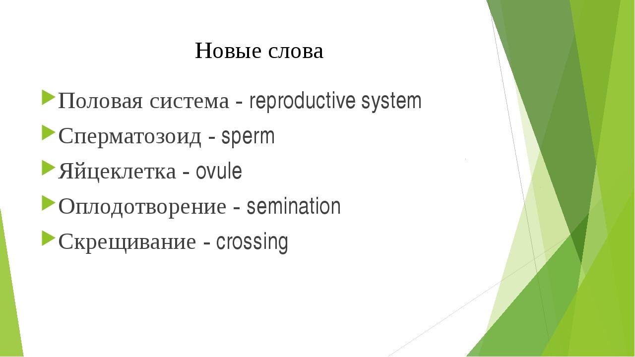Новые слова Половая система - reproductive system Сперматозоид - sperm Яйцекл...