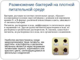Размножение бактерий на плотной питательной среде Бактерии, растущие на плотн