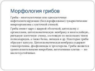 Морфология грибов Грибы - многоклеточные или одноклеточные нефотосинтезирующи