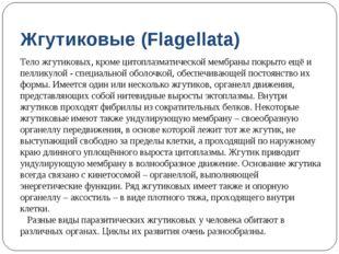Жгутиковые (Flagellata) Тело жгутиковых, кроме цитоплазматической мембраны по