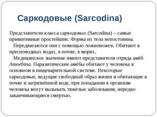 Саркодовые (Sarcodina) Представители класса саркодовых (Sarcodina) – самые пр