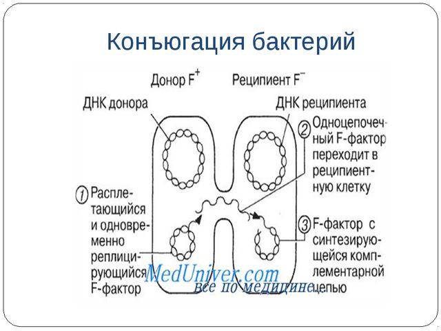 Конъюгация бактерий