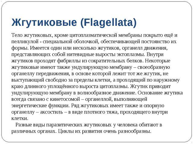 Жгутиковые (Flagellata) Тело жгутиковых, кроме цитоплазматической мембраны по...
