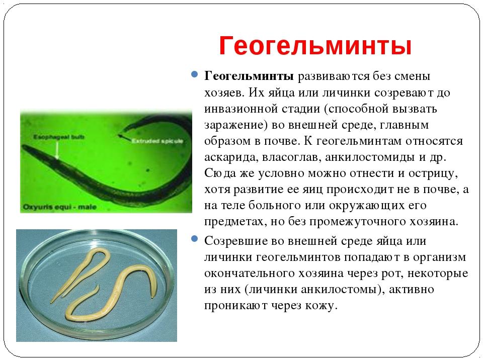 Геогельминты Геогельминты развиваются без смены хозяев. Их яйца или личинки с...