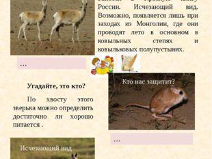Копытное животное рода газелей семейства полорогих. Занесён в Красную книгу
