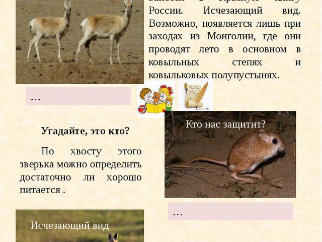 Копытное животное рода газелей семейства полорогих. Занесён в Красную книгу...