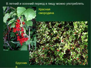 В летний и осенний период в пищу можно употреблять ягоды. Красная смородина