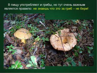 В пищу употребляют и грибы, но тут очень важным является правило: не знаешь