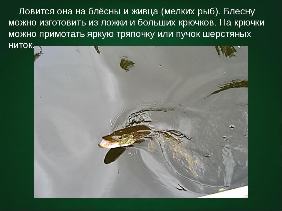 Ловится она на блёсны и живца (мелких рыб). Блесну можно изготовить из ложки...