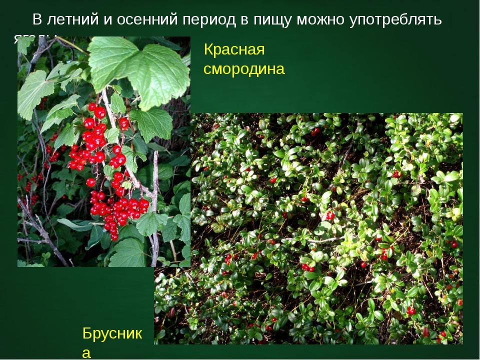 В летний и осенний период в пищу можно употреблять ягоды. Красная смородина...