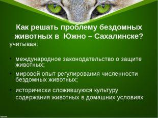 Как решать проблему бездомных животных в Южно – Сахалинске? учитывая: междуна