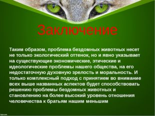 Заключение Таким образом, проблема бездомных животных несет не только экологи