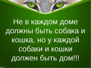 Не в каждом доме должны быть собака и кошка, но у каждой собаки и кошки долже