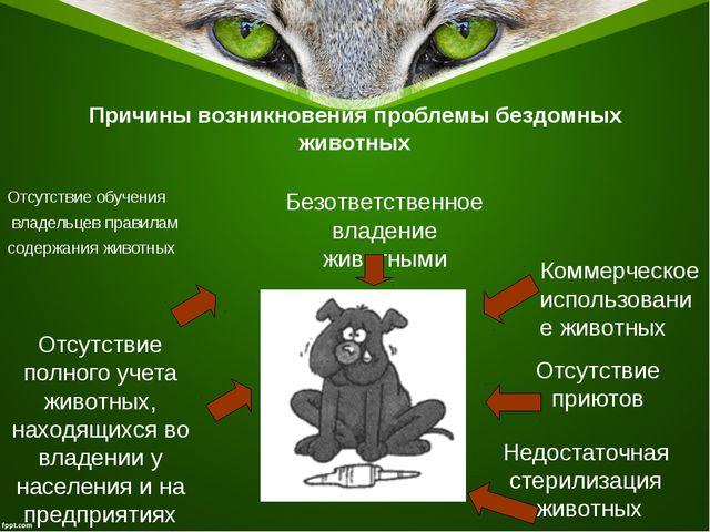 Причины возникновения проблемы бездомных животных Отсутствие обучения владель...