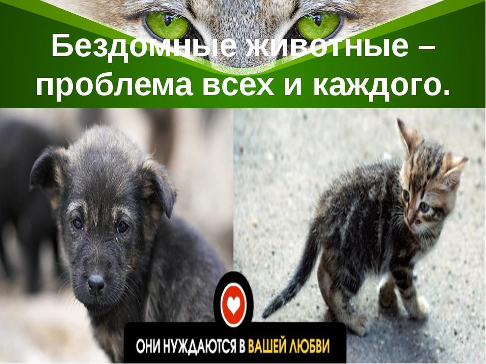 Бездомные животные – проблема всех и каждого.