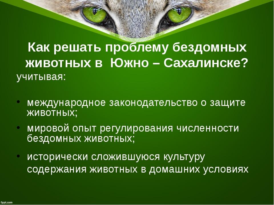 Как решать проблему бездомных животных в Южно – Сахалинске? учитывая: междуна...