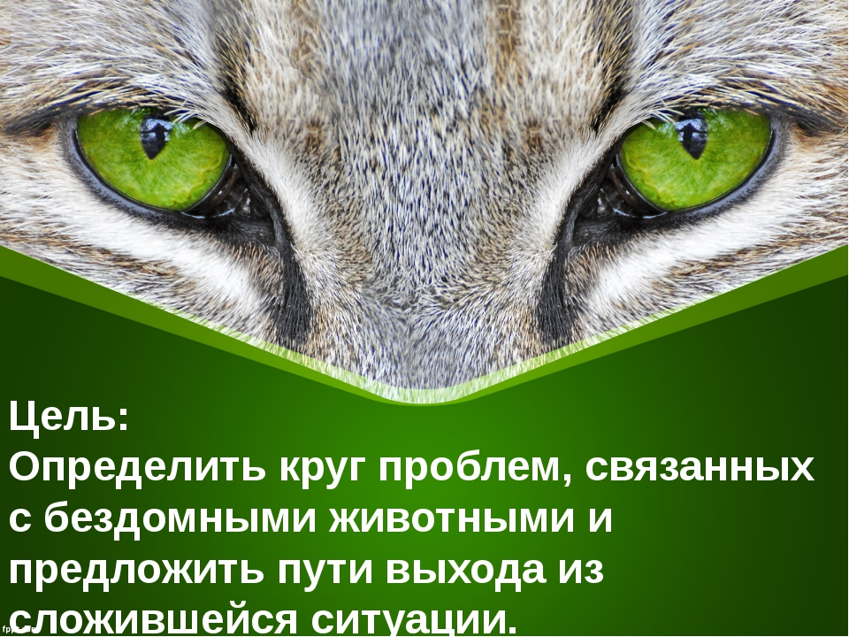 Цель: Определить круг проблем, связанных с бездомными животными и предложить...