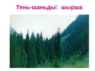 Тянь-шаньдық шырша www.ZHARAR.com