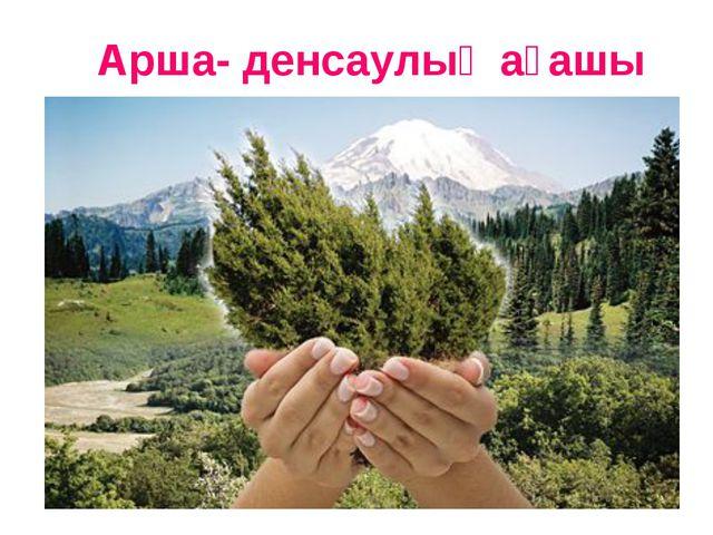 Арша- денсаулық ағашы www.ZHARAR.com