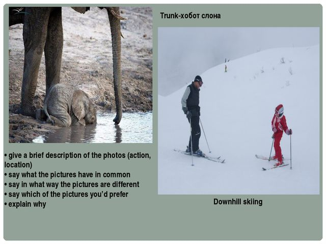 Downhill skiing Trunk-хобот слона • give a brief description of the photos (a...