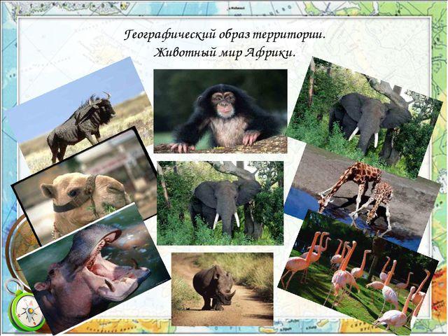 Географический образ территории. Животный мир Африки.