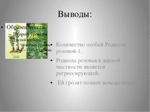 Выводы: Количество особей Родиолы розовой-1. Родиола розовая в данной местнос