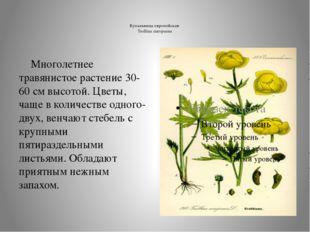 Купальница европейская Trollius europaeus  Многолетнее травянистое растение