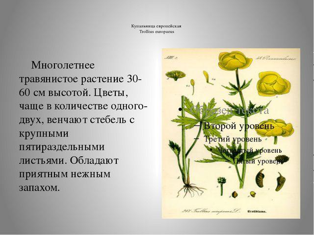 Купальница европейская Trollius europaeus  Многолетнее травянистое растение...
