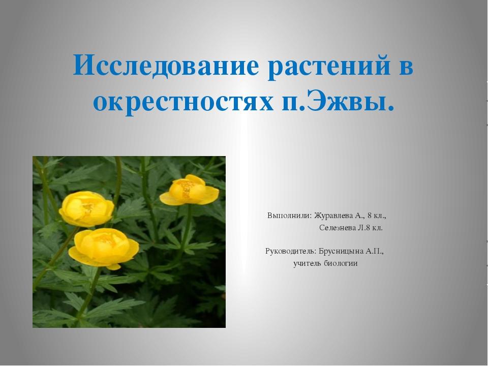 Исследование растений в окрестностях п.Эжвы.  Выполнили: Журавлева А., 8 кл....
