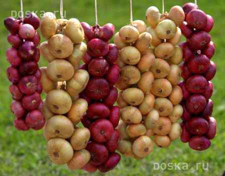http://i.doska.ru/images/2012-02-15/7154/UHwMH01h/agriculture-foodstuffs-vegetables-0-1.800.jpg