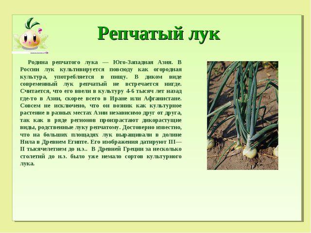 Репчатый лук Родина репчатого лука — Юго-Западная Азия. В России лук культив...