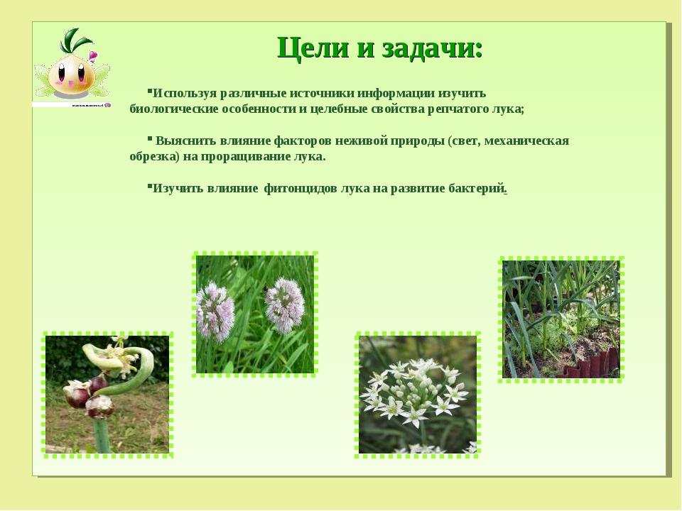 Цели и задачи: Используя различные источники информации изучить биологические...