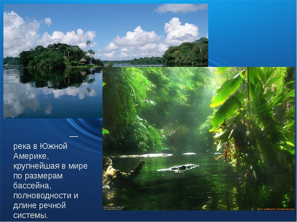 Амазо́нка — река в Южной Америке, крупнейшая в мире по размерам бассейна, по...