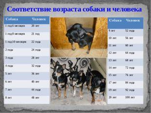 Соответствие возраста собаки и человека Собака Человек 1 год 6 месяцев 20 лет