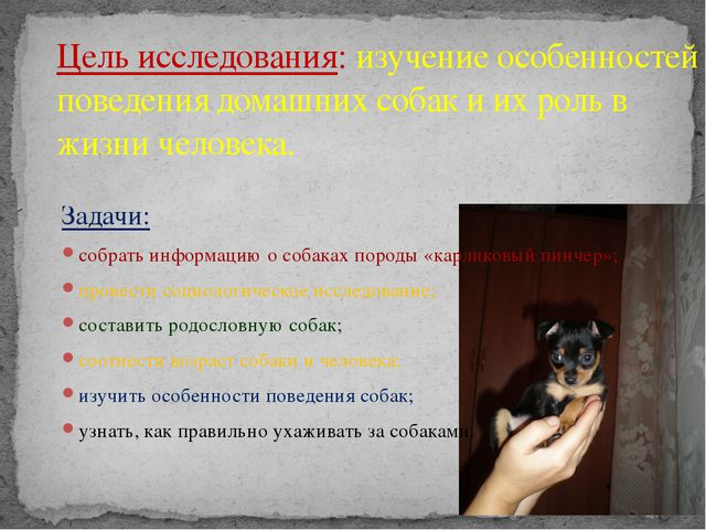 Задачи: собрать информацию о собаках породы «карликовый пинчер»; провести соц...
