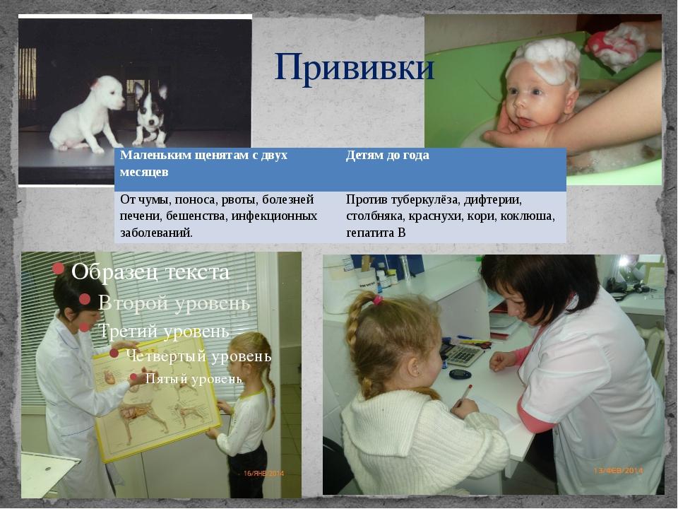 Прививки Маленьким щенятам с двух месяцев Детям до года От чумы, поноса, рвот...