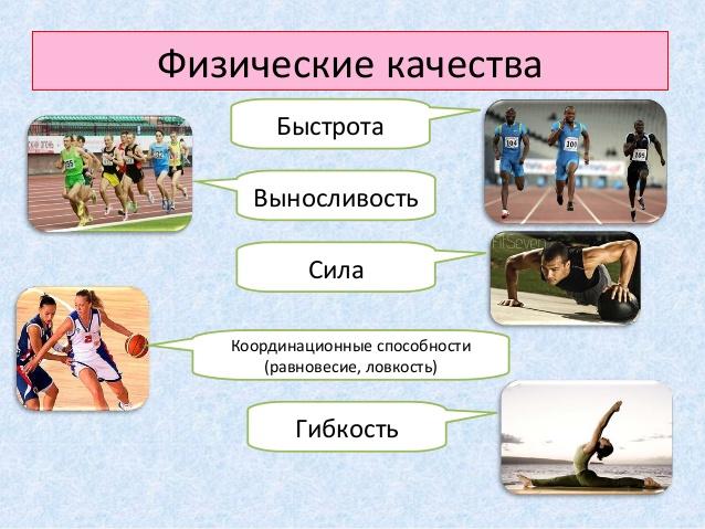E:\картинки для методички\физ.качества.jpg