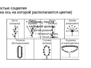 Простые соцветия (одна ось на которой располагаются цветки)