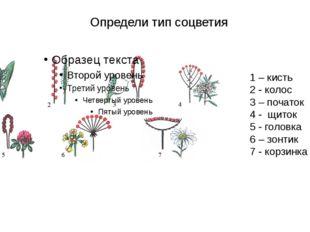 Определи тип соцветия 1 – кисть 2 - колос 3 – початок 4 - щиток 5 - головка 6