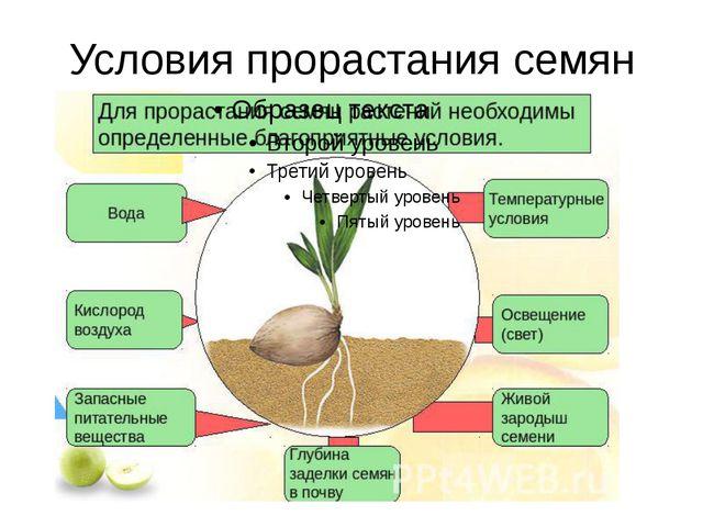 Условия прорастания семян
