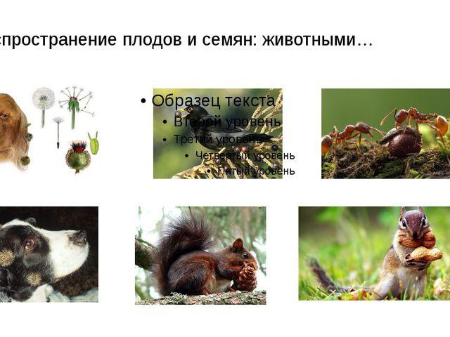 Распространение плодов и семян: животными…