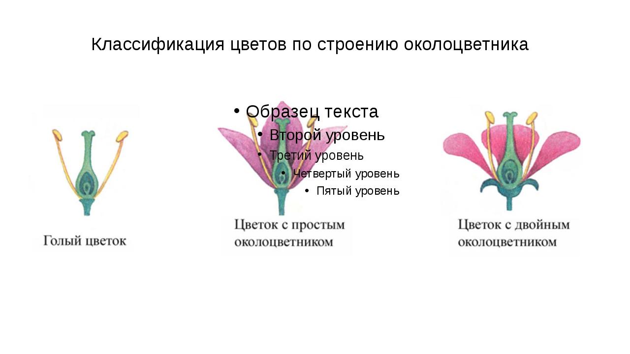 Классификация цветов по строению околоцветника