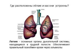 Легкие - основные органы дыхательной системы, находящиеся в грудной полости.