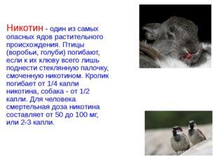 Никотин - один из самых опасных ядов растительного происхождения. Птицы (воро