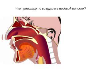"""Что происходит с воздухом в носовой полости? МКОУ СОШ№5"""""""