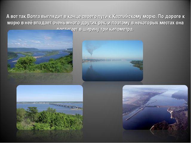А вот так Волга выглядит в конце своего пути к Каспийскому морю. По дороге к...